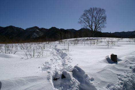 http://kashikoi-ooya.com/img/thumb1.jpg